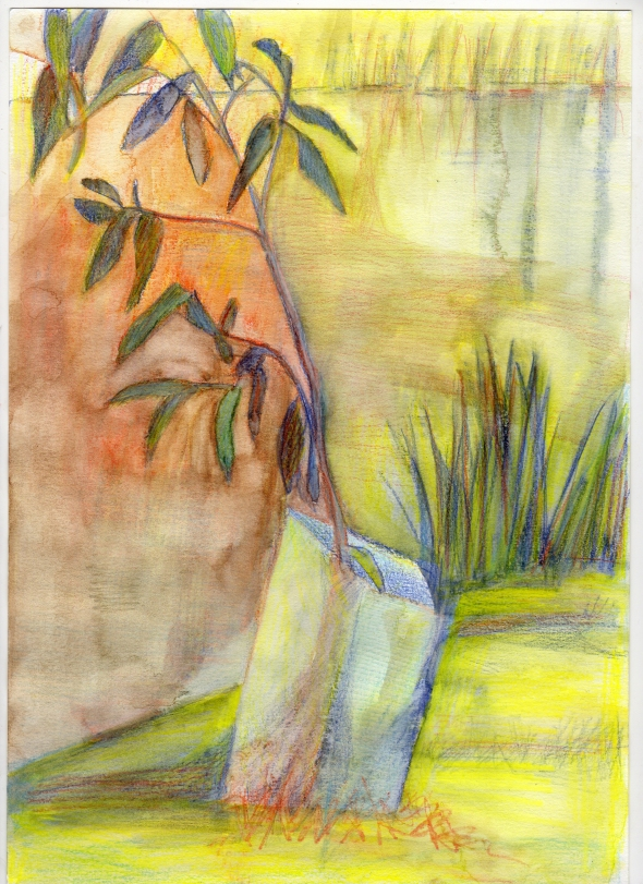 Little tree by the river, Tulya Wodli 3:30pm (Aquarelle pencil on 220gsm Ca grain paper A4 size)