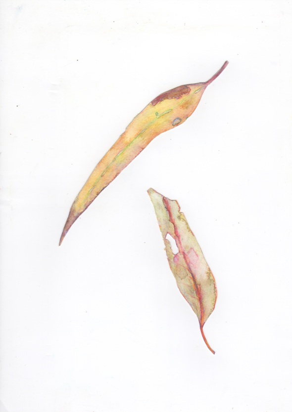 Pygmalion leaves - One side (water soluble coloured pencil on Cut Vellin paper)