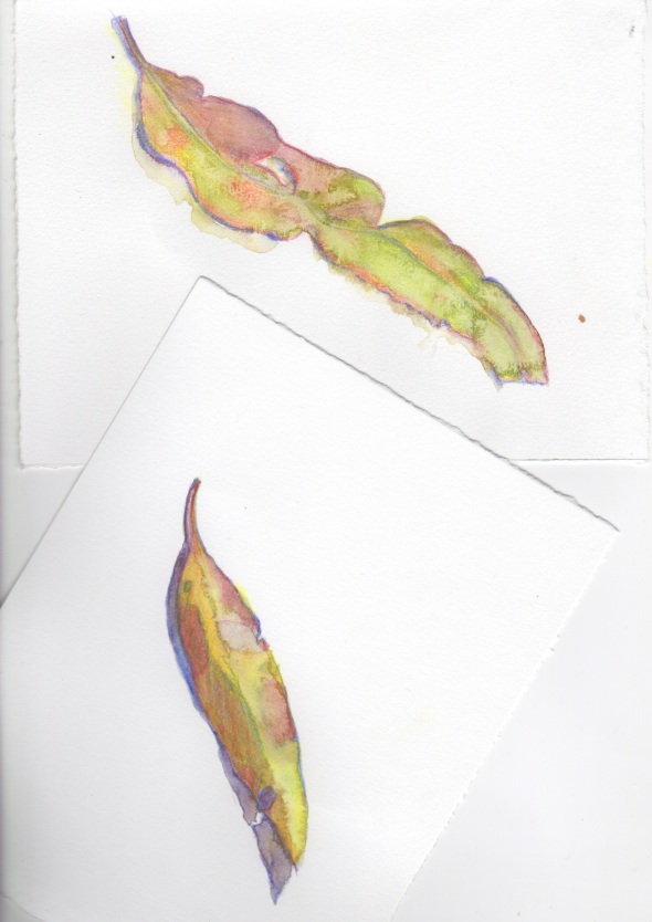 Wet Day leaf litter (Water soluble coloured pencil on Canson 200gsm