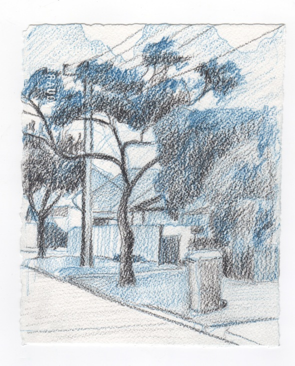 Streetscape tree, Henley Beach, 4:30pm (Coloured pencil on paper)
